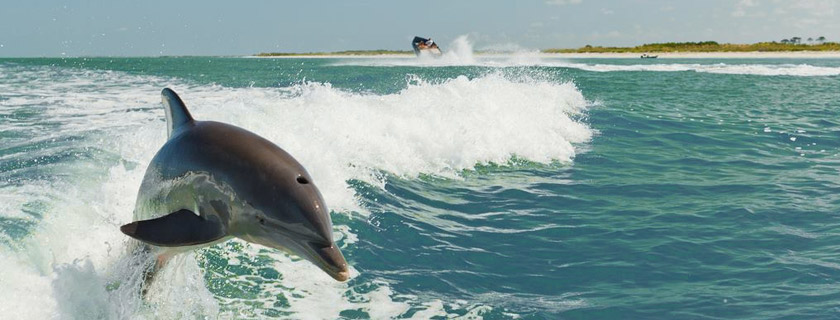 Paradise Charters Fort Myers Beach Fl